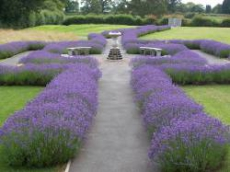 Photo of the Garden of Reflection at Hereford Crematorium