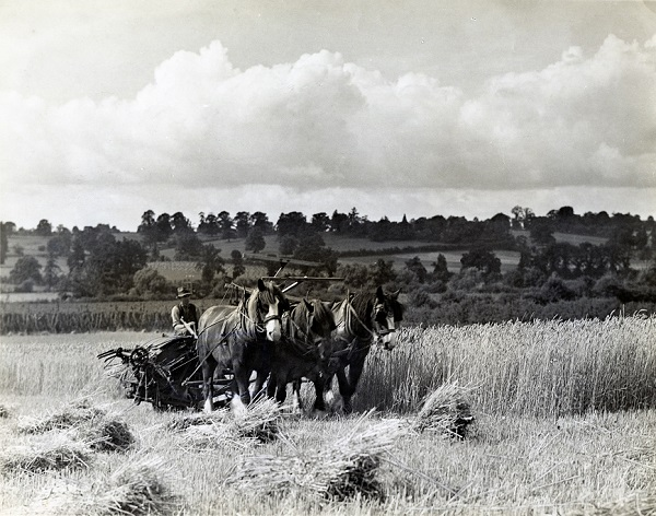 Harvesting, Lugg Valley, library, local studies