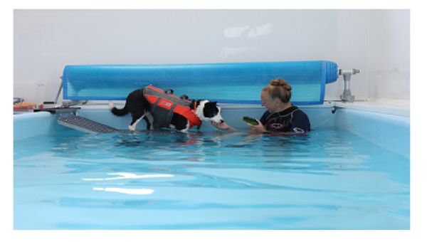 Image of dog in hydrotherapy pool