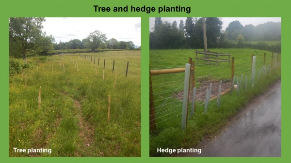 NFM tree and hedgeway planting