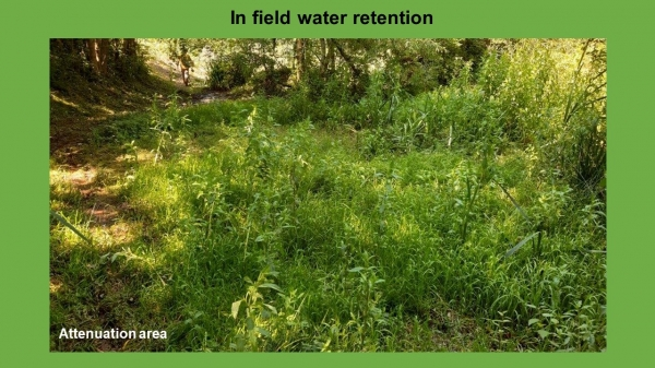 NFM In field water retention project
