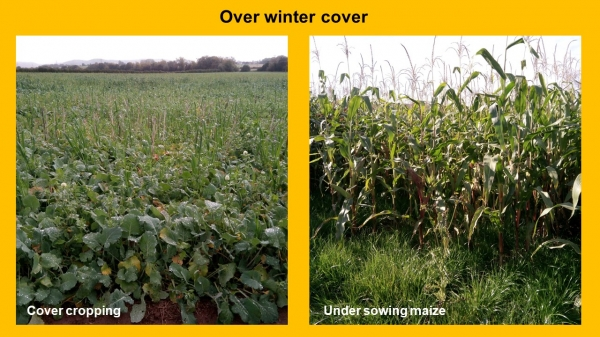 NFM Over winter cover project