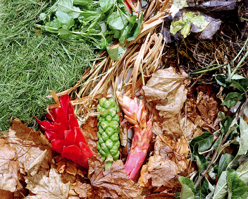 Composting close up scattered garden waste and grass clippings, image courtesy of WRAP
